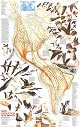 1979 Bird Migration In The Americas Map 57 x 91cm